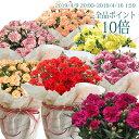 母の日 プレゼント カーネーション 5号 母の日 ギフト 母の日 鉢植え 母の日 鉢植え 花 5号カーネ プレゼント 選べる7種類 赤 レッド …