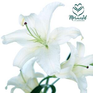 百合(ユリ)の女王 カサブランカ 切り花 フラワー 優品以上 1本 切花 生け花 花材