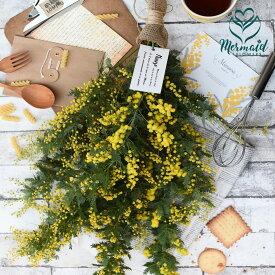 2/5〜3/10までのお届け限定!生花からドライを楽しむミモザスワッグ『ミモザ・スワッグ』フレッシュな状態で発送。玄関 誕生日プレゼント 送別 結婚祝いドライフラワー リース スワッグ インテリア 春 実物など