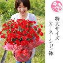 母の日 カーネーション フラワー ギフト 花 7号 鉢花 フラワー 選べる3色 エレガントなラッピング付き 特大 サプライズ 赤 レッド ピン…