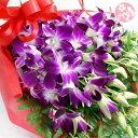 洋蘭:デンファレとグリーンの花束【送料無料】供花 常温便 お中元 サマーギフト