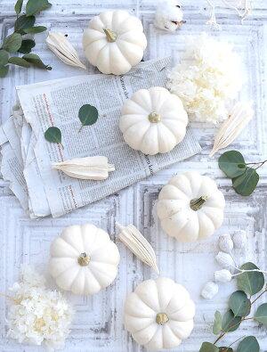 かぼちゃ白色カスペリータなど2個切花生け花花材ハロウィンディスプレイ