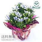 敬老の日花りんどう鉢『白寿』【送料無料】