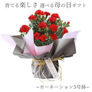 カーネーション鉢5号母の日ギフト母の日プレゼント鉢植え花5号カーネ選べる11色赤レッドピンクメッセージカード付きプリティマーメイドプリティー産地直送