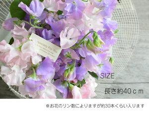 プレゼントギフトフラワー送別退職香りスイートピーの花束お好きな2色でラッピング付き送料無料