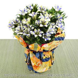 プレゼント花りんどう鉢『白寿』送料無料ギフト同梱OK贈答用