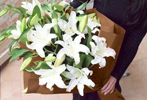 ◆カサブランカ25輪とグリーンの花束【あす楽対応】【メッセージカード無料】【楽ギフ_メッセ入力】【フラワーギフト】【お彼岸お供え花】
