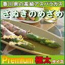 「さぬきのめざめ」極太サイズ(2L〜3L)500g【野菜】【冷蔵便】【香川県産】【アスパラガス】【農家】