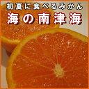 【送料無料】吉田農園の「訳あり」南津海(なつみ)1箱(約5kg)【フルーツ】【普通便】【農家】