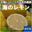 送料込み吉田農園の「海のレモン」一箱(約2kg)【フルーツ】【普通便】【送料無料】【れもん】