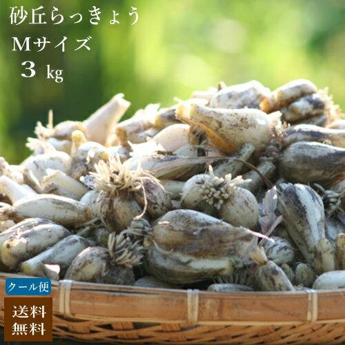 (クーポン利用で2,780円!100名様限定!)(Mサイズ)砂丘らっきょう3kg 鹿児島県産 ラッキョウ 砂付き 生らっきょう