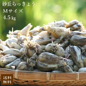(Mサイズ)砂丘らっきょう4.5kg【5月初旬より発送開始】鹿児島県産 ラッキョウ 砂付き 生らっきょう