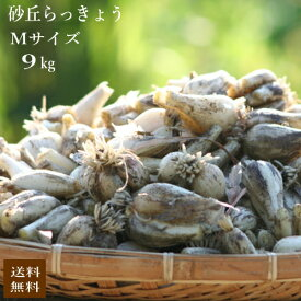 (Mサイズ)砂丘らっきょう9kg【5月初旬より発送開始】鹿児島県産 ラッキョウ 砂付き 生らっきょう