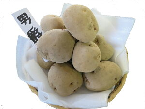 【送料無料】春じゃがいも種子 男爵1kg 定番のじゃがいもで作りやすいです。種芋です。