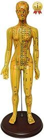 人体模型 ツボ 針灸 鍼灸経穴模型 経絡 モデル 整体 マッサージ 学習用 52.5cm(女性)