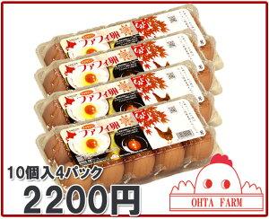 【北海道産】【チャリティーファフィ卵10個入4パック】生卵/たまごかけご飯/濃厚な卵【楽ギフ_のし】【楽ギフ_のし宛書】