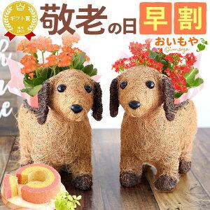 早割!敬老の日ギフト送料無料の選べる花とスイーツお菓子...