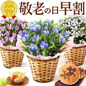 早割!敬老の日ギフト送料無料の花とスイーツお菓子セット...