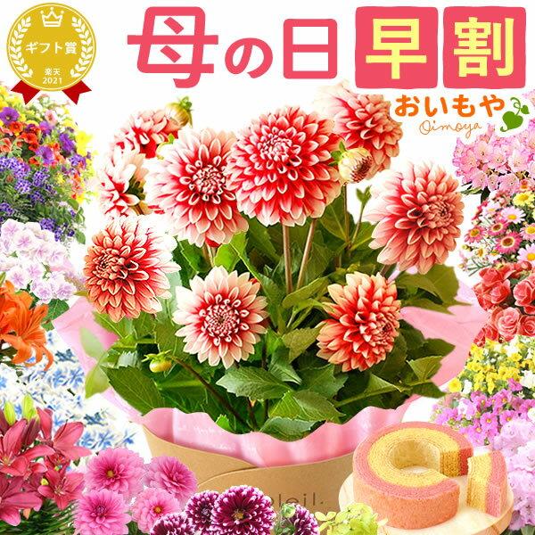 母の日ギフト早割2018 送料無料 プレゼント選べる花とスイーツセット Dset [花]AA