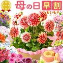 早割4/25まで!母の日ギフト2018 送料無料 プレゼント選べる花とスイーツセット Dset [花]AA