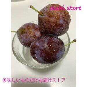 シーズン終了間近です。サンプルーン??北海道仁木町産 生プルーン 約1kg(2パック)フレッシュなプルーンをクール便でお届けします。現在の販売は第三弾「サンプルーン」です。10月1