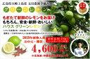 【送料無料】広島県大崎上島産ハウスグリーンレモン 防腐剤不使用 良品2kg(約17玉〜20玉)