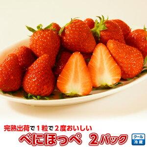 """いちご イチゴ 小橋さんちの べにほっぺ 2パック こだわりの""""完熟出荷""""だから1粒で2度楽しめる、甘くて美味しい新鮮イチゴ。苺 茨城産 ギフト"""