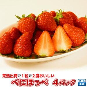 いちご イチゴ 小橋さんちの べにほっぺ 4パック こだわりの完熟出荷だから1粒で2度楽しめる、甘くて美味しい新鮮イチゴ。苺 茨城産 ギフト