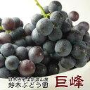 50箱限定 お彼岸に 訳あり 巨峰 茨城県 送料無料 巨峰予約 ぶどう フルーツ 巨峰 種あり 約1.5kg ご家庭用 ブドウ 葡萄 甘い 美味しい …