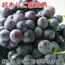 訳あり 巨峰 茨城県 送料無料 巨峰予約 ぶどう フルーツ 巨峰 種あり 約2kg ご家庭用 ブドウ 葡萄 種あり 甘い 美味しい お取り寄せ 産…