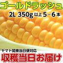 とうもろこし 茨城県 トウモロコシ 送料無料 朝採り ゴールドラッシュ 2kg 2L 350g以上 5〜6本 甘い 美味しい お取り寄せ 産地直送 コ…