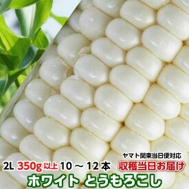 とうもろこし 茨城県 トウモロコシ 送料無料 朝採り クリスピーホワイト2L 350g以上10〜12本4kg 甘い 美味しい お取り寄せ 産地直送 コーン