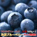 ブルーベリー 茨城県 やわらぎファーム 冷凍 ブルーベリー1kg 500g×2 送料無料 茨城県 小美玉 産地直送 ギフト 食物繊維 抗酸化作用 …