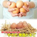 卵 タマゴ 「やさと産直たまご L20個」 送料無料 安全安心 産み立て産地直送 卵 たまご 玉子 茨城 送料無料 ギフト お…
