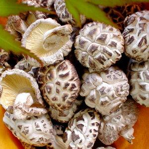 グルメも唸る!大分産原木乾小粒花どんこ椎茸140g 10P28oct13