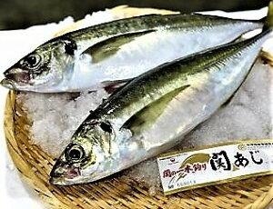 冬はさば、夏はアジが旬!!! 佐多岬天然一本釣りの新鮮な関さばor関アジの片身ブロックで、寿司屋、居酒屋様歓迎、ご自分でスライスして下さい