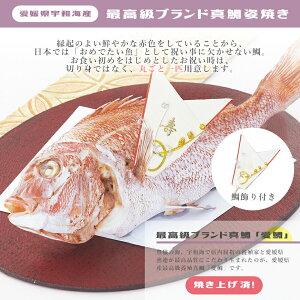 愛媛県宇和海産最高級ブランド真鯛姿焼き1kg