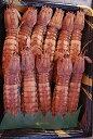 ボイルシャコ 殻つき超特大! 0.5kg 1尾約15cm[2〜4人前][しゃこ][シャコ][寿司ネタ][蝦蛄][おかべ水産][ギフト][…