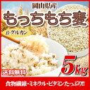 29年産岡山県産大麦100%もっちもち麦5kg 送料無料 北海道・沖縄は700円の送料がかかります。もち麦 大麦 雑穀
