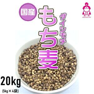 国産 もち麦 ダイシモチ 20kg (5kg×4袋) 紫もち麦