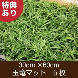 玉竜 マット 5枚 送料無料(関東・東海・関西・北陸)自家栽培 高品質 タマリュウ