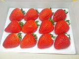 新品種栃木県産とちあいかお土産フルーツ