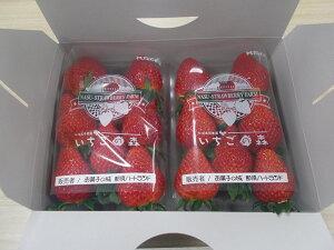 栃木県産とちおとめ   いちご お土産 フルーツ