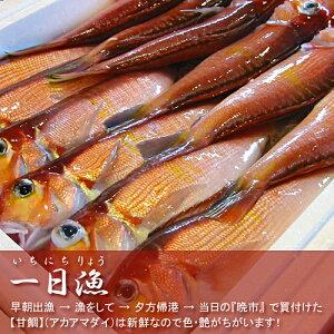 『一日漁』の新鮮な甘鯛