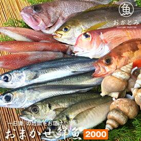 おまかせ鮮魚2,000円〜夏の地魚鮮魚〜鮮魚セット 鮮魚 詰め合わせ 国産 島根産 日本海 直送 産地直送 お取り寄せグルメ【天候・漁模様により、お届けまでにお時間をいただく場合がございます。】
