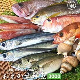 おまかせ鮮魚3,000円〜夏の地魚鮮魚〜鮮魚セット 鮮魚 詰め合わせ 国産 島根産 日本海 山陰沖 直送 お取り寄せグルメ【天候・漁模様により、お届けまでにお時間をいただく場合がございます。】
