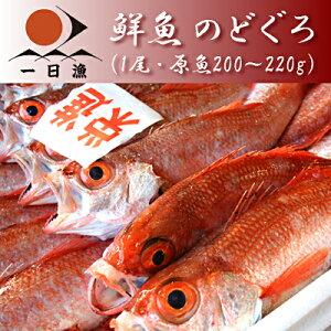 鮮魚のどぐろ(1尾・原魚200〜240g)※魚の重量は原魚(鱗や内臓を取り除く前の状態)の重さです。※大きさは頭の先から尾の先までで25cm前後となります。