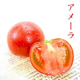 アメーラ 1kg 大きさお任せ 最高品質 完熟 高糖度 フルーツ トマト 【岡山果物工房】