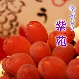 岡山県産 紫苑 2房600g×2 贈答用 ぶどう 葡萄 ブドウ ギフト フルーツ 天然 スイーツ お歳暮【岡山果物工房】