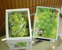 岡山 特産 種無しで皮まで食べられる 桃太郎ぶどう(900g前後入り)(7月下旬からのお届け)【吉英フルーツ】 ランキングお取り寄せ